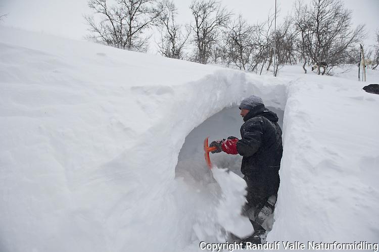 Mann graver liggeplass i kantgrop. ---- Man digging snow bivouac.