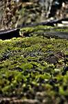 Moss growing outside on wood