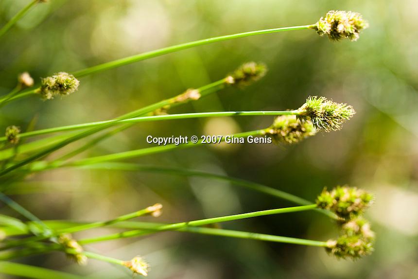 Wild grasses emerge at Lake Fulmor