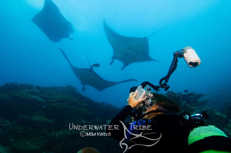A photographer takes photos of Manta rays, Manta birostris, Valley of the Rays, Goofnuw Channel, Yap, Federated States of Micronesia, Pacific Ocean