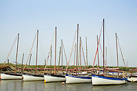 Sailing boats moored at Morston Quay, near Blakeney, North Norfolk, United Kingdom