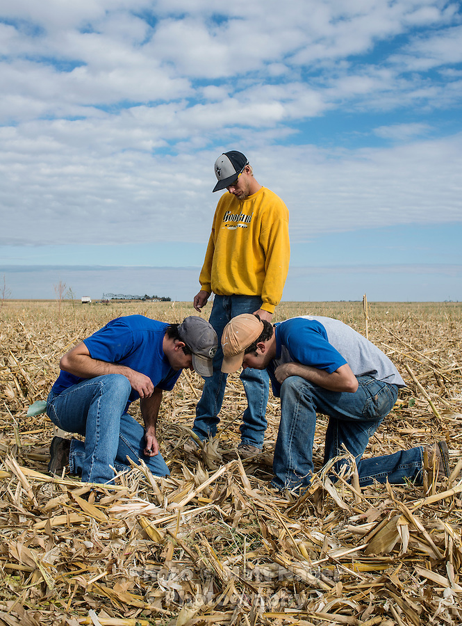 Seth Cavenee (cq, in blue) and his brother Stacy Cavenee (cq, front right) both recently returned to their home town of Tribune, Kansas, to be near their family and work on the family farm, test soil before a corn harvest, Saturday, October, 12, 2013. The challenges of depopulation in the rural Midwest and Great Plains continue to grow as counties increasingly see more deaths than births. Greeley County, Kansas's least populated county, and the state as a whole are mounting a new fight to stem losses and finding early success. Sights and people of Tribune, Kansas.<br /> <br /> NO NAME FOR GUY IN YELLOW<br /> <br /> Photo by Matt Nager