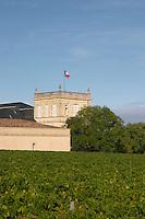 Vineyard. Chateau Ducru Beaucaillou, Saint Julien. Medoc, Bordeaux, France