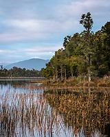 Dawn at Lake Mahinapua near Hokitika, West Coast, Westland, New Zealand, NZ