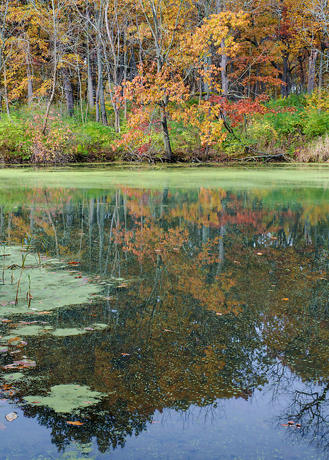 The bordering forest is reflected in the autumn waters of Mark's Pond at Green Valley Forest Preserve in DuPage County, Illinois