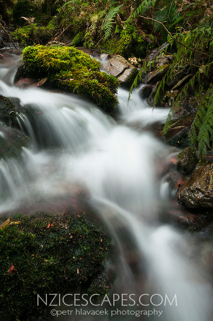 Unnamed bush stream in Copland Valley, Westland NP, West Coast, New Zealand