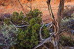 A rock wall and dead trees in the Devil's Garden hiking area at Arches National Park, Utah, USA