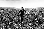 Vineyard Worker Puliny-Montrachet