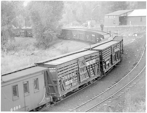 Stock car train at Durango.<br /> D&amp;RGW  Durango, CO  Taken by Richardson, Robert W. - 10/3/1951