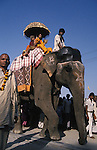 A Mahant atop an elephant on his way back to his camp after bathing at the Sangam. where the Ganges,Yamuna and Saraswati Rivers meet. It was estimated that over 100,000 Sadhus and holy men attended the Maha Kumbha Mela in 1989.Maha Kumbha Mela is held every twelve years at Prayag (Allahabad) in Uttar Pradesh in India.