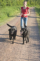 Black Labrador retrievers (AKC) being taken for a walk by a 13 year old girl.  Summer.  Winter, WI.