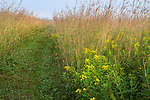 Nachusa Grasslands Natural Area, Illinois:<br /> Path through a summer tallgrass prairie with big bluestem and goldenrod, Nachusa Grasslands, Nature Conservancy