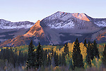 Morning alpenglow on East Beckwith Mountain above autumn aspens, Gunnison National Forest, Colorado