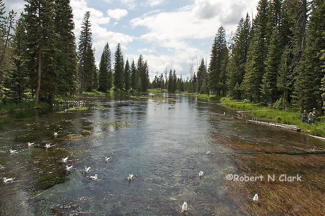 Big Springs near Island Park, Idaho