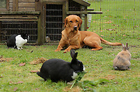 FAO JANET TOMLINSON, DAILY MAIL PICTURE DESK<br /> Pictured: One of the dogs in the rabbit enclosure Wednesday 23 November 2016<br /> Re: The Dog House in the village of Talog, Carmarthenshire, Wales, UK