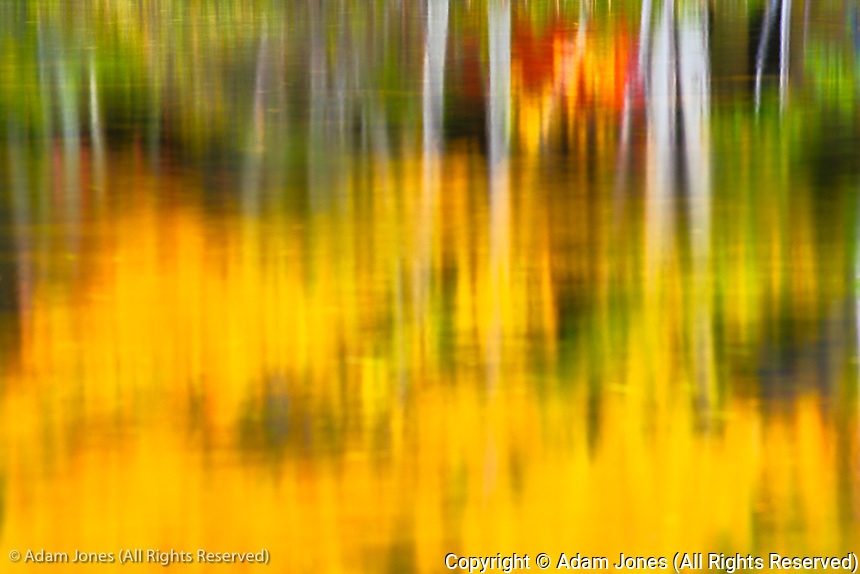 Abstract view of tree trunks reflecting on pond, Mount Desert Island, Acadia National Park, Maine