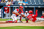 26 February 2019: Washington Nationals catcher Pedro Severino gets St. Louis Cardinals left fielder Randy Arozarena out at the plate in the 7th inning of a Spring Training game at the Ballpark of the Palm Beaches in West Palm Beach, Florida. The Nationals fell to the visiting Cardinals 6-1 in Grapefruit League play. Mandatory Credit: Ed Wolfstein Photo *** RAW (NEF) Image File Available ***