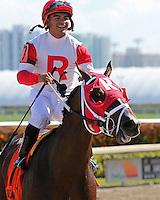 HALLANDALE BEACH, FL - FEBRUARY 04:  Kitten's Cat (KY) #7 with jockey Luis Saez heads to the winners circle, after winning the Kitten's Joy Stakes  at Gulfstream Park on February 04, 2017 in Hallandale Beach, Florida. (Photo by Liz Lamont/Eclipse Sportswire/Getty Images)