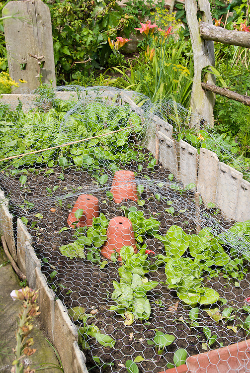 Keeping Chickens, Pests, Pets, Animals And Wildlife Out Of The Vegetable  Garden Crops