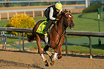 LOUISVILLE, KY - MAY 1: Hofburg, trained by Bill Mott, exercises in preparation for the Kentucky Derby at Churchill Downs on May 1, 2018 in Louisville, Kentucky. (Photo by Eric Patterson/Eclipse Sportswire/Getty Images)