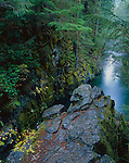 Willamette national Forest, OR: Mossy rock walls of Opal Pool in the forest of the Opal Creek Scenic Recreation Area