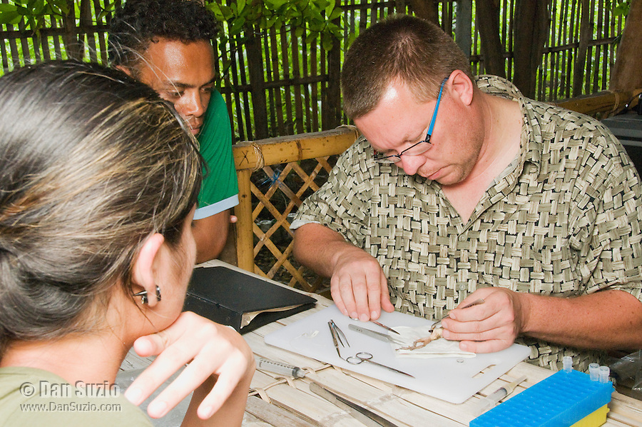 American herpetologist Hinrich Kaiser and his students prepare specimens at their makeshift research station at Tua Koin Resort, Atauro Island, Timor-Leste (East Timor). Left to right: Marianna Tucci, Luis Lemos, Hinrich Kaiser.
