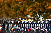 Autumn canopy over the Starting Gate