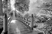 Bridge, sun rays through fog, and fall colored japanese maples. Portland Japanese Gardens, Portland, Oregon