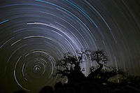 Baobab and star trails<br />