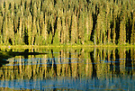 A lakeside forest reflects in the calm waters, Washington.