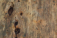 Tree Snag Detail, San Juan Island, Washington, US