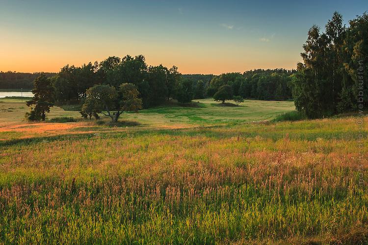 Åker med sädesfält i skymningen på Gålö i Stockholms skärgård.