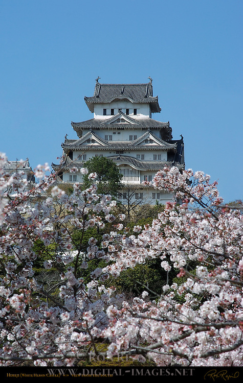 Himeji Castle View from South with Sakura Shirasagi-jo White Heron Castle Himeji Japan