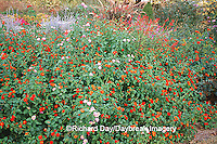 63821-172.08 Red Spread & Pink Lantana, Pineapple Sage, Russian Sage, Purple Fountain Grass, Marion Co. IL