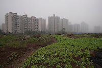 Urban Residential Real Estate Development in Chongqing, China.  © LAN