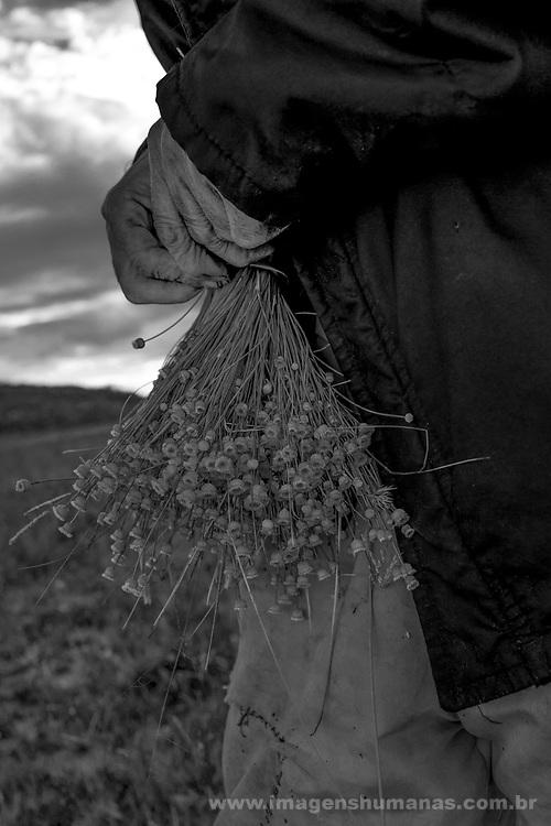 Popula&ccedil;&otilde;es Tradicionais de apanhadores de flores Sempre Vivas situadas na Serra do Espinha&ccedil;o em Diamantina, Minas Gerais.<br /> Popula&ccedil;&otilde;es atingidas pela implanta&ccedil;&atilde;o do Parque Nacional das Sempre Vivas, Parques Estaduais e Unidades de Conserva&ccedil;&atilde;o.<br /> Comunidade Galheiros, composta por apanhadores de flores sempre vivas que realizam a comercializa&ccedil;&atilde;o de produtos artesanais feitos com flores nativas. A atividade &eacute; a principal fonte de renda da comunidade. Seu Ant&ocirc;nio Borges, apanhador de flor e morador de Galheiros, coletando flores no Campo Entrada do Cedro.