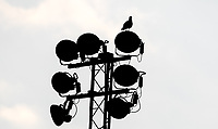 Silhouette of a pigeon on the floodlights during the Friendly match between Wycombe Wanderers and AFC Wimbledon at Adams Park, High Wycombe, England on 25 July 2017. Photo by Kevin Prescod.