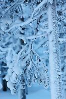 Europe/Finlande/Laponie/Env de Levi: montagne en hiver