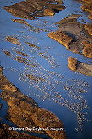 00882-03107 Sandhill Cranes (Grus candensis) aerial above Platte River near Kearney   NE