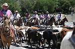 The cattle drive moves down Clear Acre Lane into Reno, Nev., to kick off the 95th annual Reno Rodeo, on Thursday, June 19, 2014.<br /> Photo by Cathleen Allison