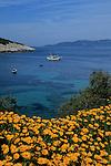 Crosière en goélette en Croatie.  Iles de la Dalmatie.Ile de Bisevo. crique et fleurs.Bisevo Island.Cruise in Croatia. Island of Dalmatia