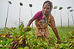 Sornolota Kisku harvests plants to feed her pigs in Suihari in northern Bangladesh. Devastating floods in August 2017 affected thousands of families across the region, and Christian Aid and the Christian Commission for Development Bangladesh, both members of the ACT Alliance, worked together to provide emergency food packages to vulnerable families, including Kisku.