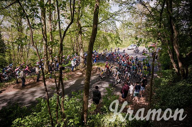 peloton in the forest<br /> <br /> 83rd La Flèche Wallonne 2019 (1.UWT)<br /> One day race from Ans to Mur de Huy (BEL/195km)<br /> <br /> ©kramon