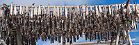 Cod stockfish hang from  wood drying racks to dry in winter air, Lofoten islands, Norway