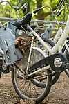 A blackbird shelters its newly-hatched chicks after making a nest in an unusual spot - on a bicycle.  The bird took advantage of public bikes not being used due to lockdown restrictions and used one to create a home for its four chicks.<br /> <br /> Photographs show the nest wedged next to a child seat above the rear wheel and balancing on the seat stays.  Amateur photographer Albert Beukhof, 44, took these shots at the Hoge Veluwe National Park near Arnhem, Holland, which is famous for its free, white bikes.  SEE OUR COPY FOR DETAILS.<br /> <br /> Please byline: Albert Beukhof/Solent News<br /> <br /> © Albert Beukhof/Solent News & Photo Agency<br /> UK +44 (0) 2380 458800