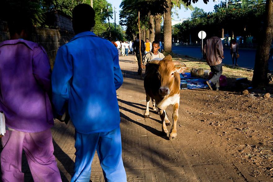 Addis Ababa, Ethiopia on  November 26, 2008. Photo by Jasmin Shah.