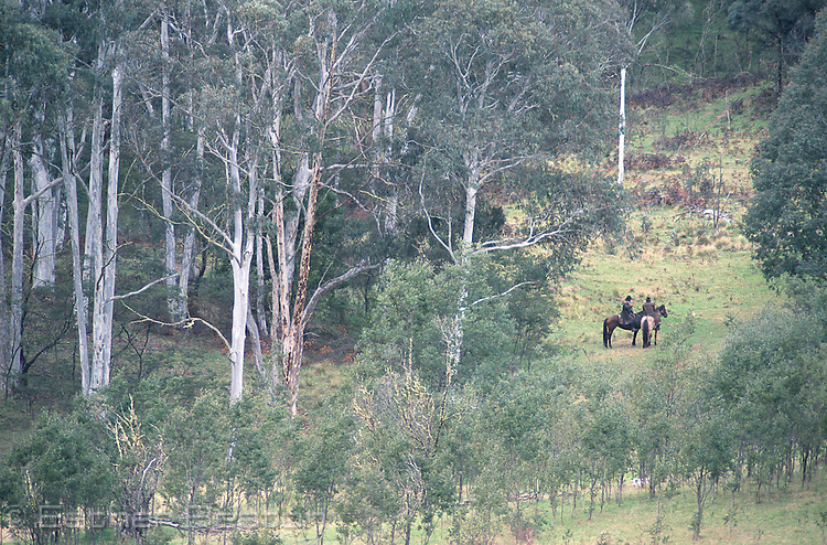 "Mountain cattlemen (stockmen of the ""high country"") halt during a chase. Mt Buller, Snowy Mountains, Victoria"