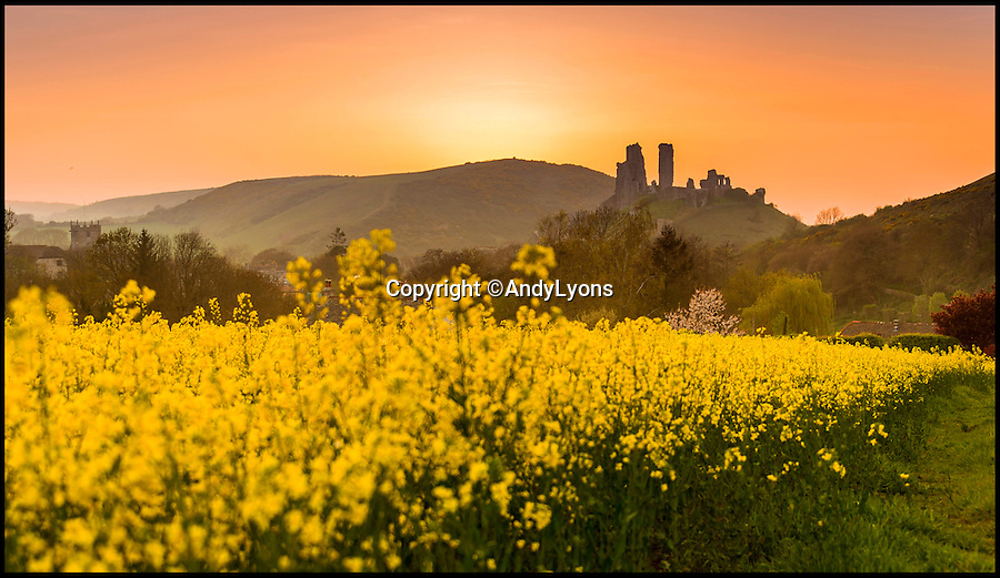 BNPS.co.uk (01202 558833)<br /> Pic: AndyLyons/BNPS<br /> <br /> Last of the spring sunshine was captured in this very mellow yellow sunset near Corfe Castle in Dorset last night. <br /> <br /> The weather is finally set to change today as much needed rain sweeps in from the west.