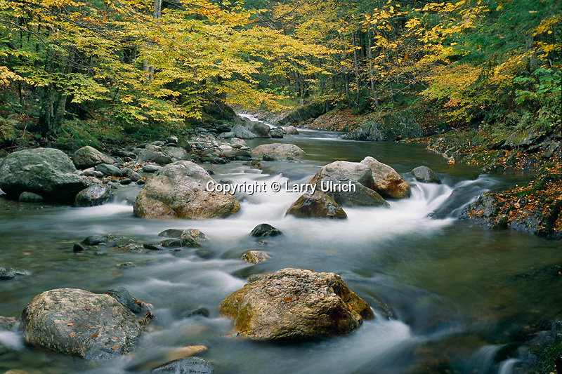 White River and American Beech<br />