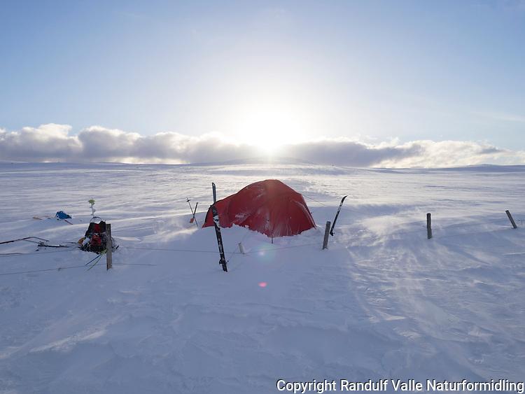 Teltleir ved Leavnnjasjavri på grensa til Stabbursdalen nasjonalpark. ---- Tent beside Leavnnjasjavri in Finnmark.